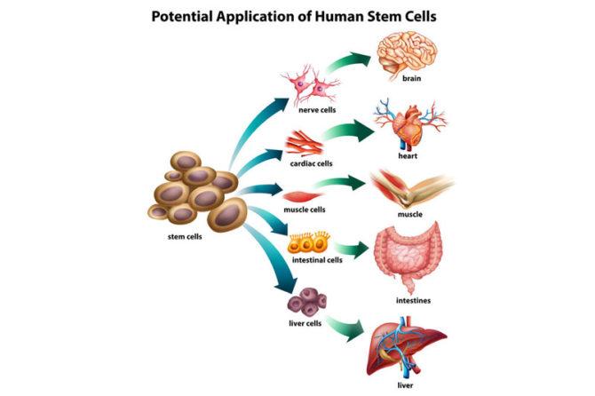 April 2018 – Stem Cells Cleveland